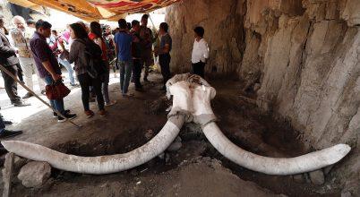 15 ezer éves mamutmaradványok kerültek elő Mexikóban