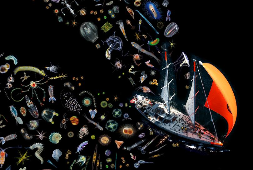 Felmérték a világtengerek planktonállományát