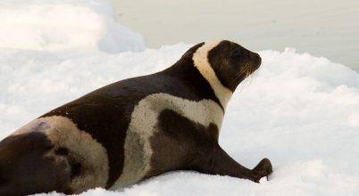 Halálos vírus terjedését segíti az olvadó sarki jég