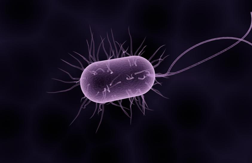 A baktériumok is hozzájárulnak a klímaváltozáshoz