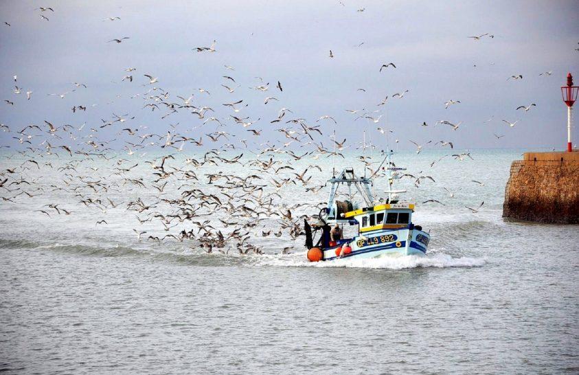 Milliónyi tengeri madár él az eldobott halzsákmányból