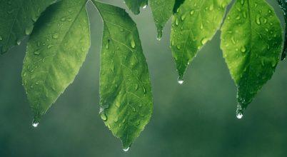 A növények reakciói az esőcseppekre