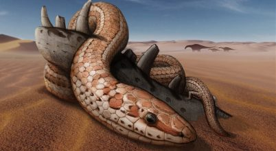 Új felfedezés árulkodik a kígyók evolúciójáról