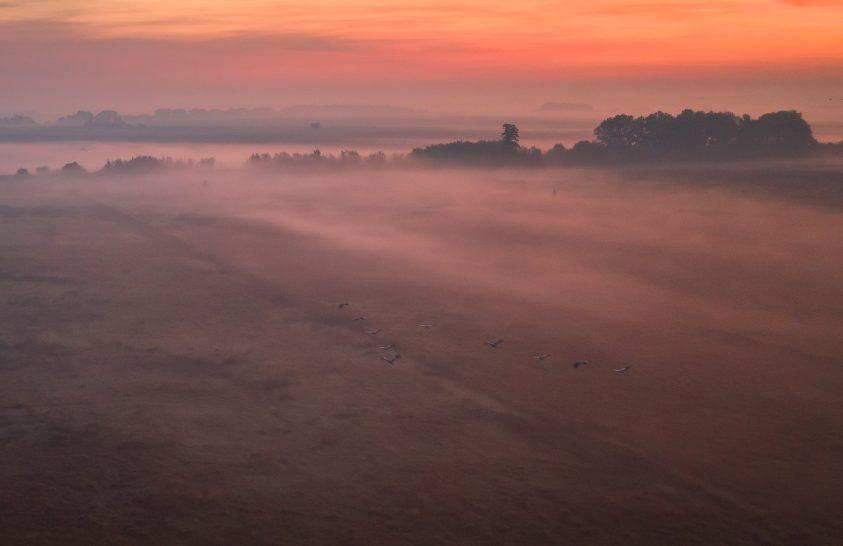 A nap képe: Hortobágyi pitymallat, darvakkal