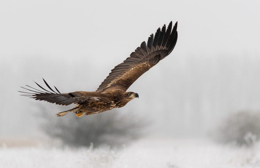A nap képe: Téli vadász