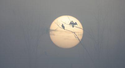 A nap képe: Kárókatonák a napkeltében