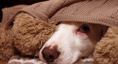 Fokozott figyelemre intenek az állatvédők a petárdázás miatt