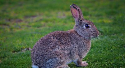Javult tíz veszélyeztetett faj természetvédelmi besorolása