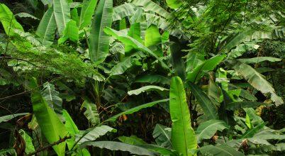 Vadon élő növények magvai még hasznosak lehetnek a jövőben