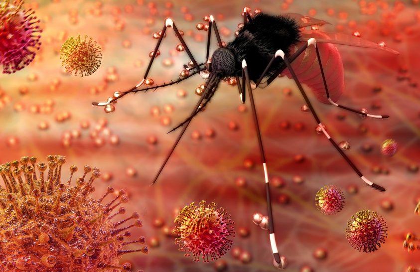 A Zika-láz terjedését modellezték szegedi matematikusok