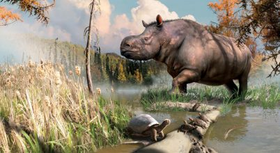 Egykor orrszarvúak és teknősök is éltek a Yukon területén