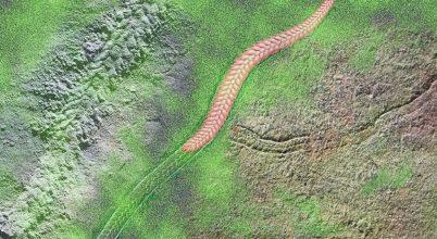 Több mint félmilliárd éves nyomkövületeket fedeztek fel
