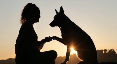 Jobban értik a kutyák a szavainkat, mint véltük
