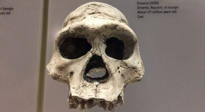 A vártnál tovább maradhatott fenn a Homo erectus