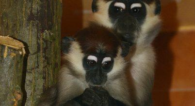 Különleges faj érkezett a Miskolci Állatkertbe