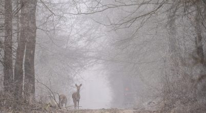 Egy ködös, hideg reggelen