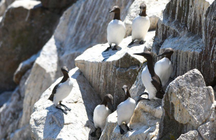 Hőhullámok okoztak madárpusztulást a Csendes-óceánban
