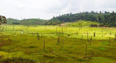 Összefüggés az amazóniai erdőirtás és a malária terjedése között