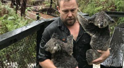 Állatok az ausztráliai katasztrófa után