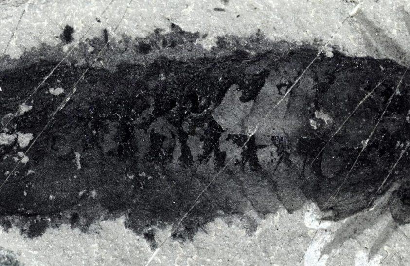 Bizarr ízeltlábú volt az első csáprágós