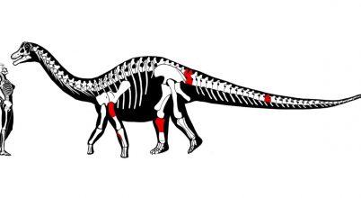 Hosszú nyakú dinoszaurusz maradványaira bukkantak Ecuadorban