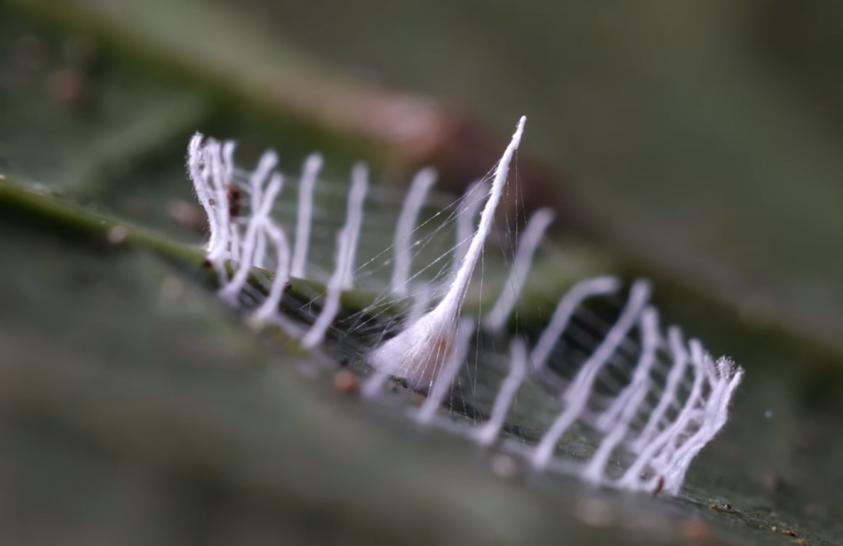 Videó készült a pókok selyemoszlopairól