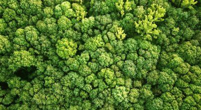 Megérkeztek a világűrből az erdőfelmérés első adatai