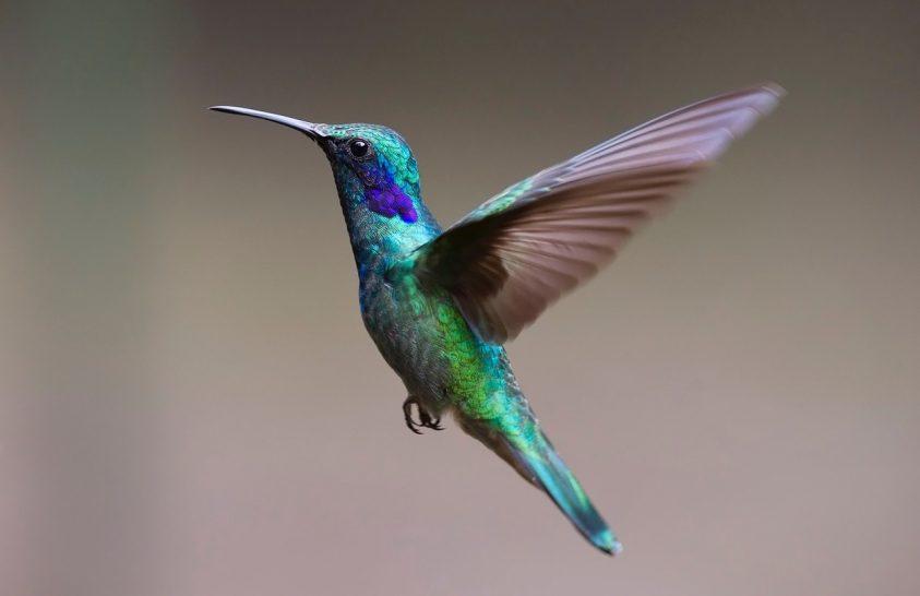 Mi a kolibrik ragyogó tollszíneinek titka?