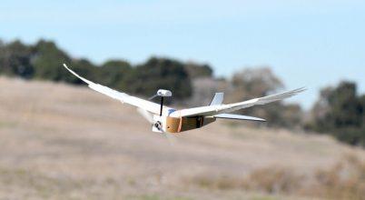 Egy robot működése mutatott rá a madarak tökéletes repülési technikájára
