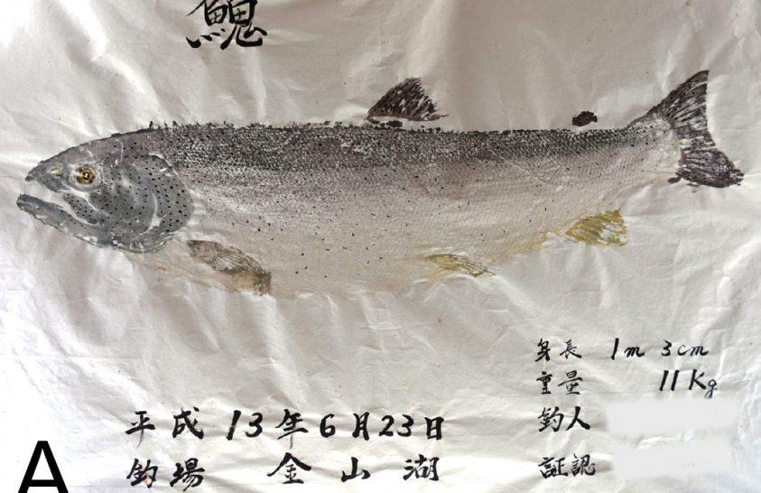 Japán halnyomatok árulkodnak a halak múltbéli elterjedéséről