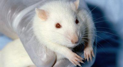 Csökkent az állatkísérletek száma az Európai Unióban