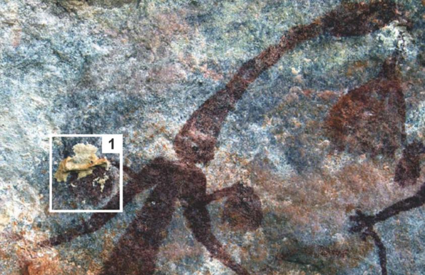 Darazsak segítettek az ausztráliai sziklarajzok datálásában