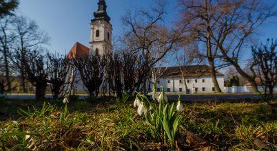 Hóvirágok Alsóvároson