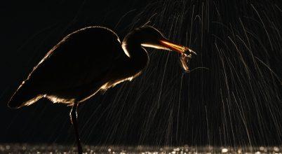 A nap képe: Éjszakai halász