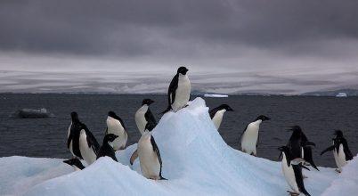 20 Celsius-fok fölötti hőmérsékletet mértek az Antarktiszon