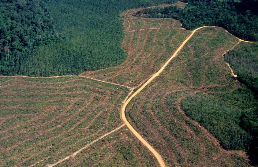 Rekord mennyiségű fát vágtak ki Amazóniában