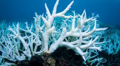 A melegedő óceánvíz továbbra is veszélyezteti az ausztrál Nagy-korallzátonyt