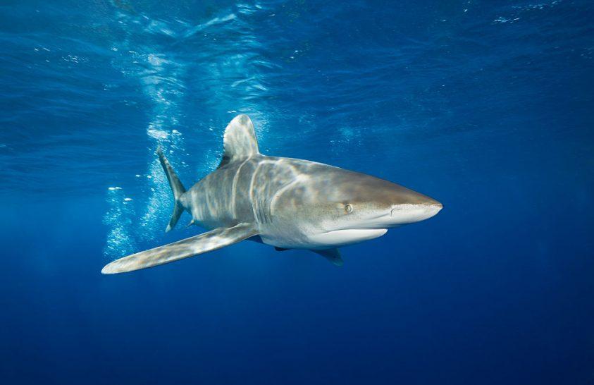 Tíz vándorló állatfaj kaphat az eddiginél nagyobb védelmet