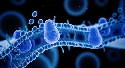 Daganatos és autoimmun betegségek kezelésének új megoldása, szegedi kutatóktól