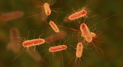 Sikeres antibiotikum-kutatás mesterséges intelligenciával
