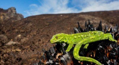 Herpetológusok kiáltványa az élővilág sokféleségének védelmében