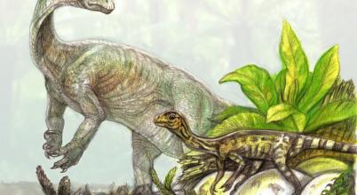 Mire felnőttek, két lábra ágaskodtak a hatalmas dinoszauruszok