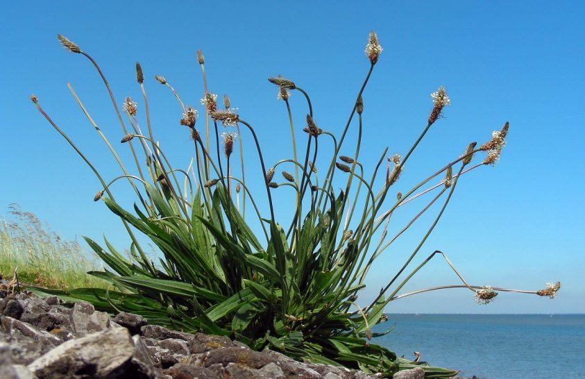 A szabályszegő növények élhetik túl a klímaváltozást
