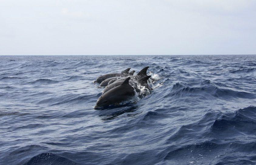 Fegyverrel öltek meg két delfint