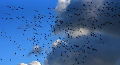 Radarok örökítették meg a madarak vonulását