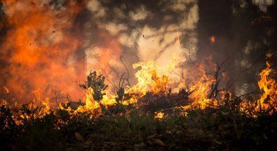 Az ausztráliai erdőségek ötöde odaveszett