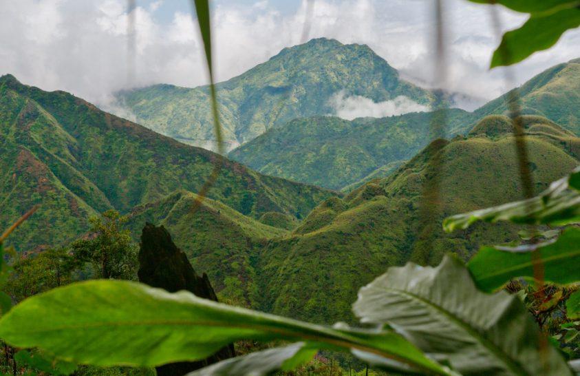 Kardamomszüret a vietnami őserdőben