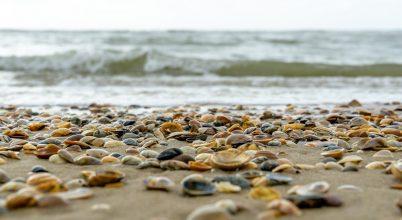 Tömegesen pusztultak a kagylók Új-Zéland partjainál