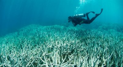 Mi rejlik a korallfehéredés mögött?