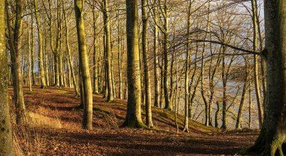 Az európai erdők génfelmérésének eredményei